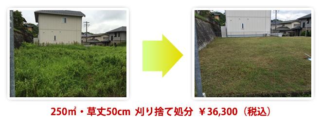 250㎡・草丈50cm  刈り捨て処分  ¥36,300(税込)